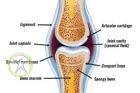 http://scpt.ir/uploads/Synovial joint.jpg