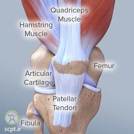 http://scpt.ir/uploads/knee-anatomy.jpg