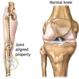 http://scpt.ir/uploads/knee-bones-line-of-gravity.jpg