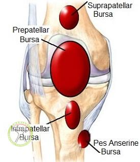 http://scpt.ir/uploads/knee-bursa-anatomy.jpg