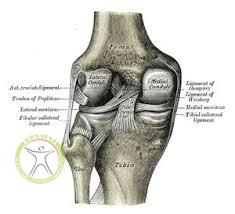 http://scpt.ir/uploads/medial collateral ligament meniscus.jpg
