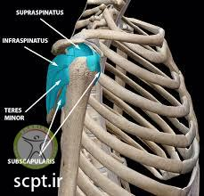 http://scpt.ir/uploads/rotator cuff tear diagnosis.jpg
